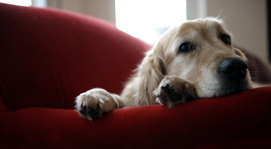 Votre chien est-il assuré?